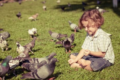 boy-with-pigeons.jpg